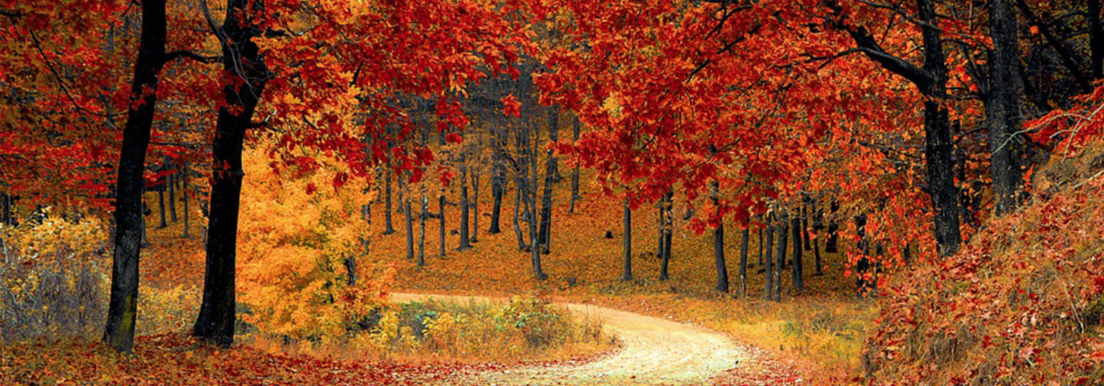 Fall trees lining road image slide