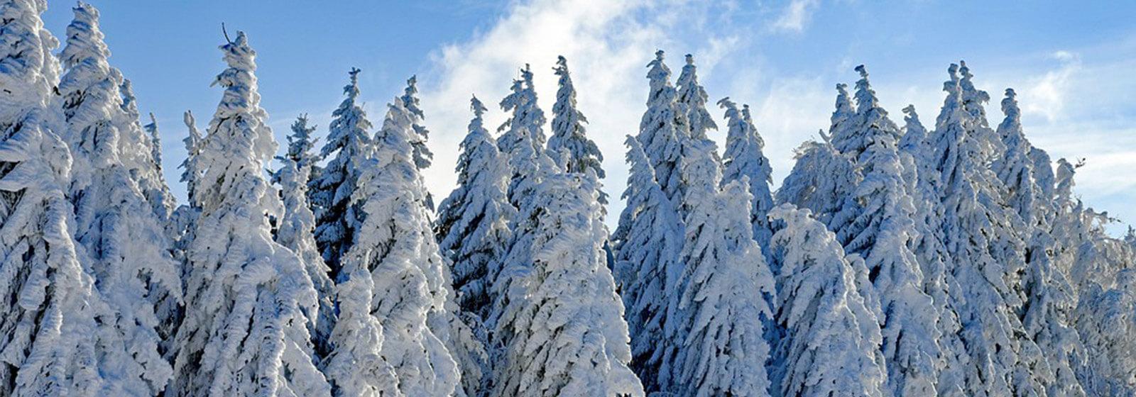 Winter image slide