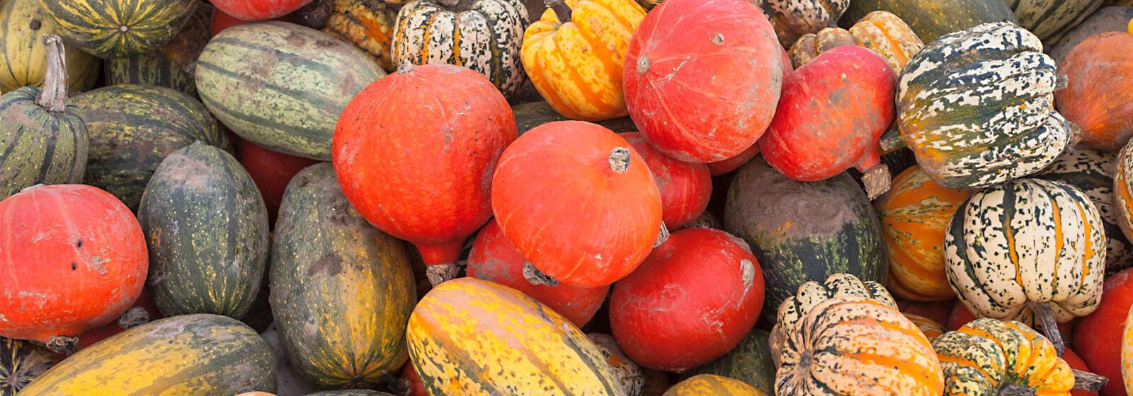 Gourds image slide