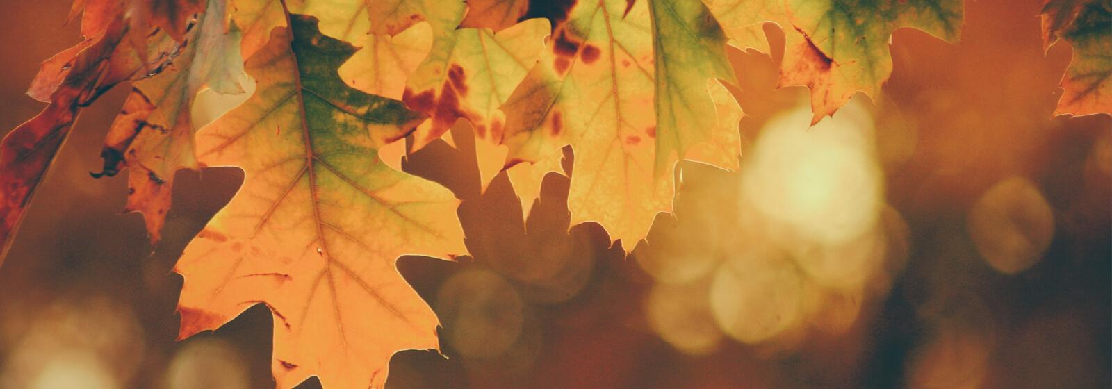 Fall Leaves image slide